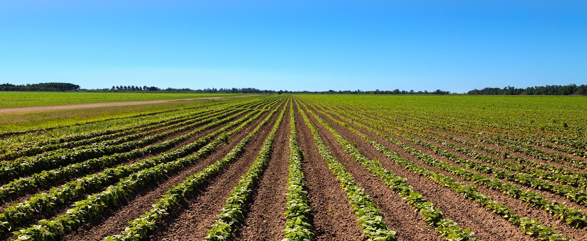 Plantação de soja de imóvel rural em São Paulo - PRA SP