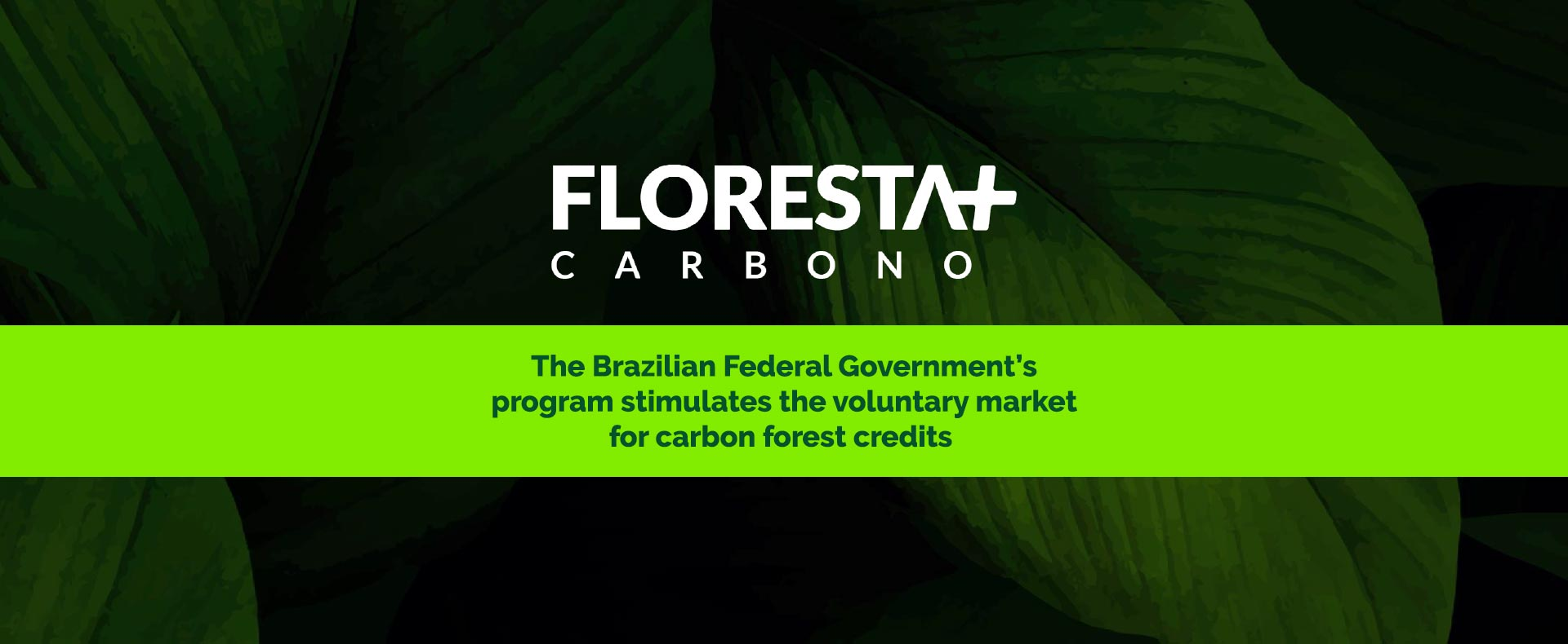 Forest+ CARBON: greater security for buyers and stakeholders of carbon forest offsets from Brazil