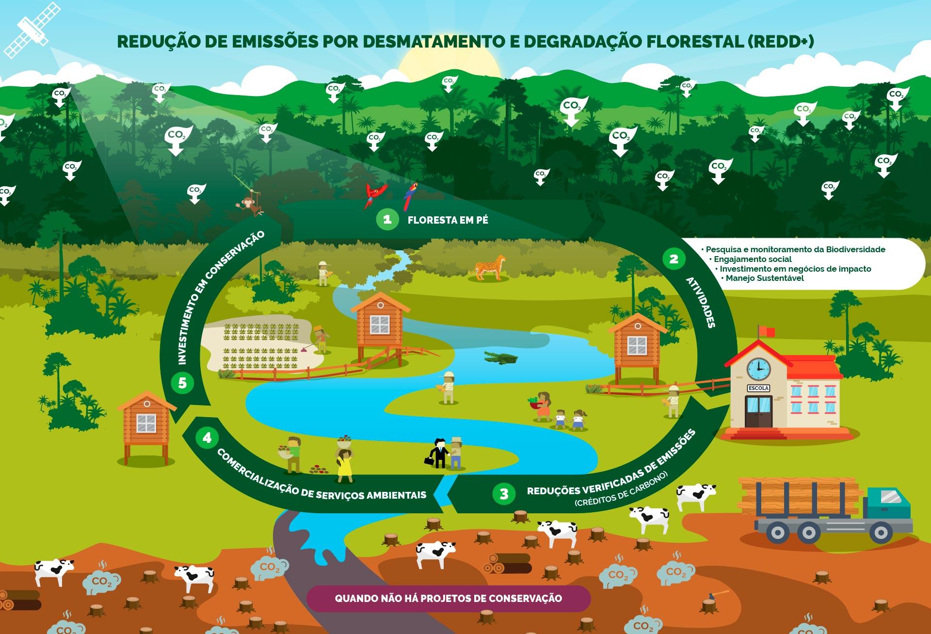 Redução de Emissões provenientes de Desmatamento e Degradação Florestal somado (+) a conservação dos estoques de carbono florestal, manejo sustentável de florestas e aumento dos estoques de carbono florestal.